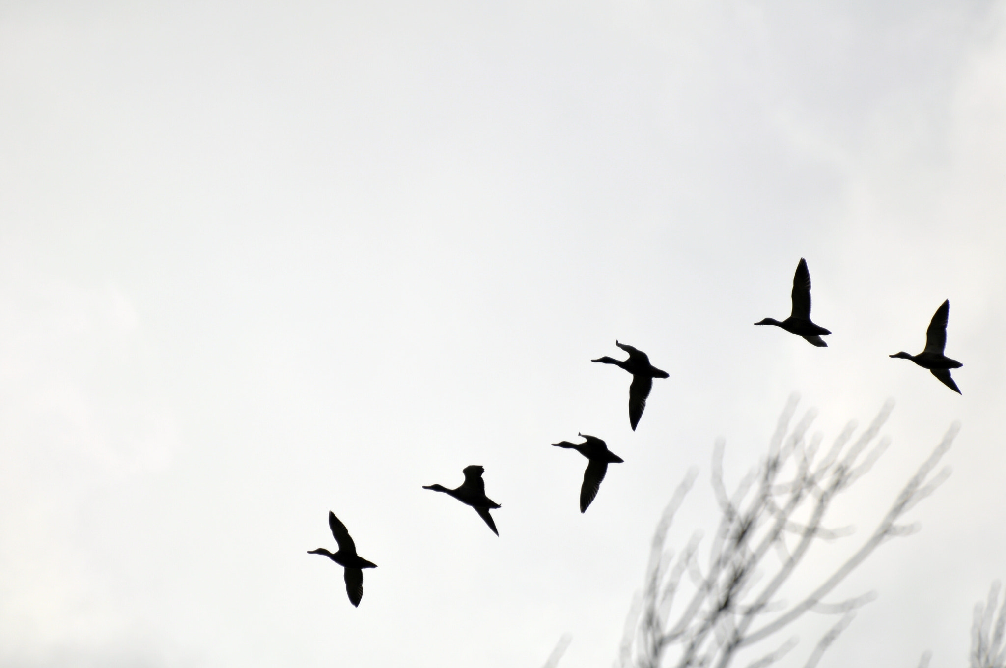 Photograph the flight by Simone Righi on 500px