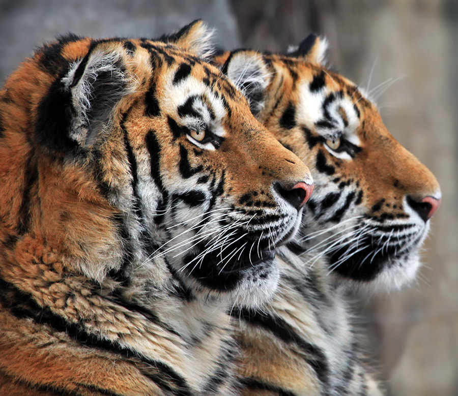 Photograph Twins by Klaus Wiese on 500px