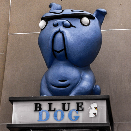 Blue Dog, Bern, Panasonic DMC-FZ2