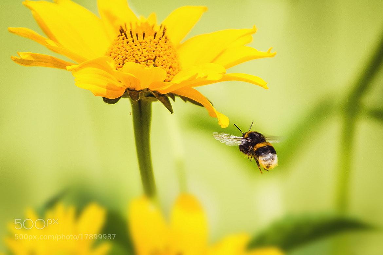 Photograph Fly by Serg  Piltnik (Пилтник) on 500px