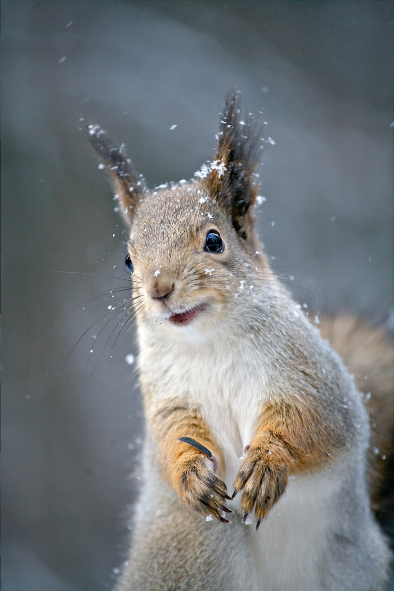 Photograph Smiley Squirrel by Gleb Skrebets on 500px