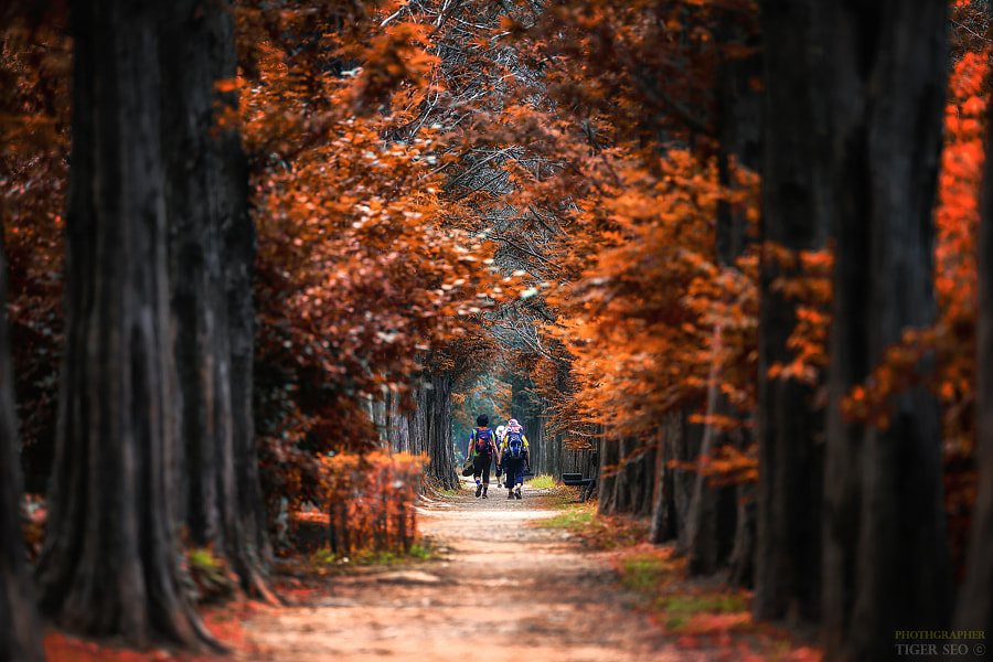 into the autumn by Tiger Seo