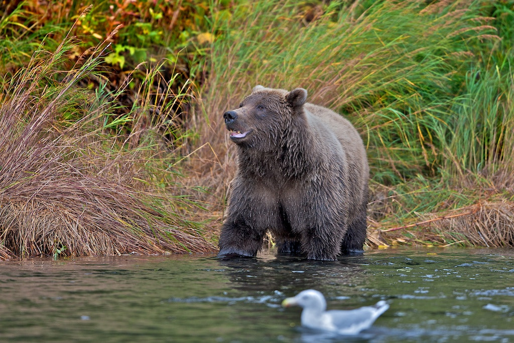 Photograph Happy Go Lucky by Buck Shreck on 500px