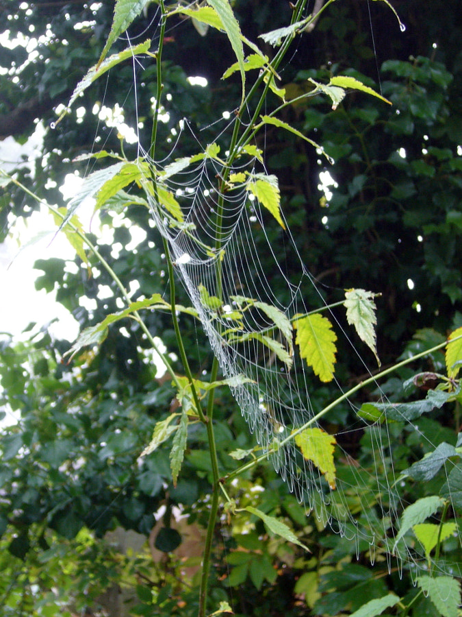 Spiders Come Out In The Autumn by Sandra on 500px.com