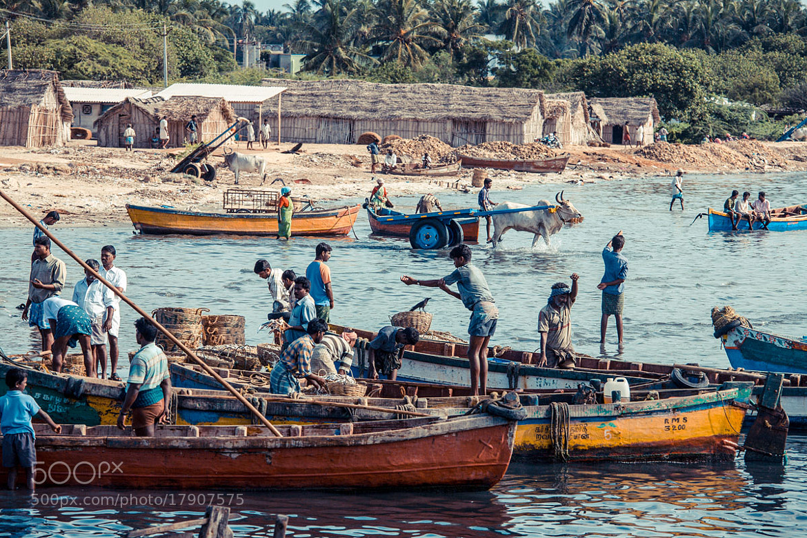 Photograph Rameswaram Harbour by Philippe CAP on 500px