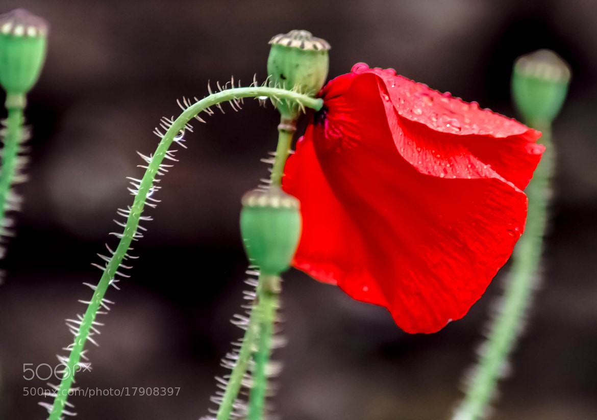 Photograph Lest We Forget by julian john on 500px