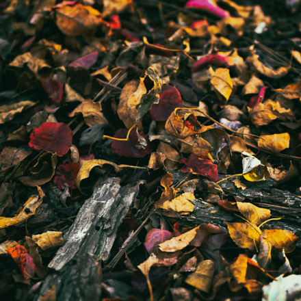 Warm Colors, Autumn Leaves, Canon EOS DIGITAL REBEL XTI, Canon EF 28-80mm f/2.8-4L