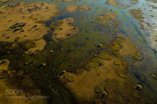 Photograph Okavango by ryan green on 500px
