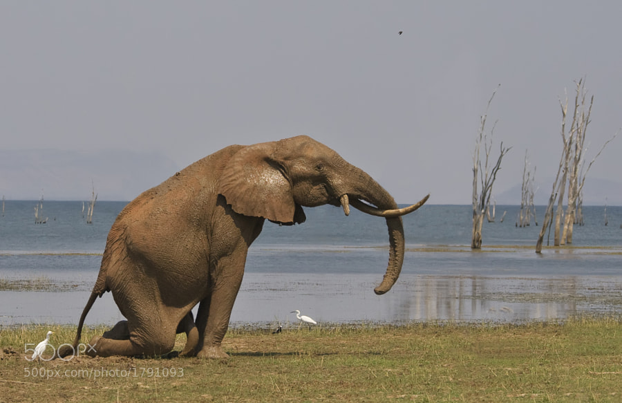Taken on Rhino Island, Matusadona , Zimbabwe, 19th September 2010.