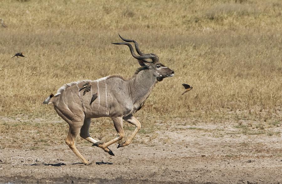 Taken in Hwange National Park, Zimbabwe, 21st June 2009.