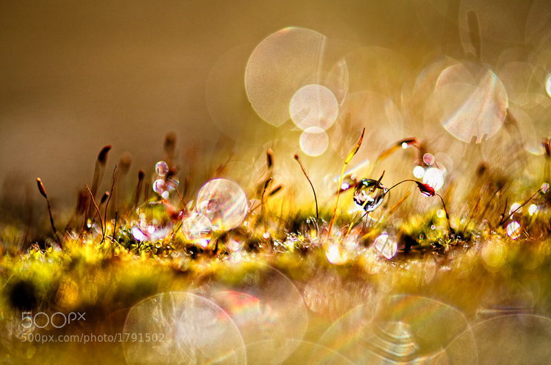 Photograph Fairy light * by BLOAS Meven on 500px