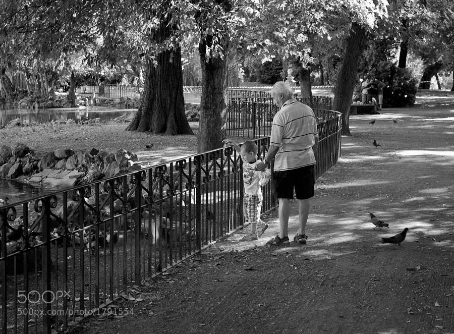 Father and son feed the birds in a sun-dappled park