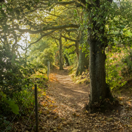 Wooded path, nr Fermain, Guernsey.