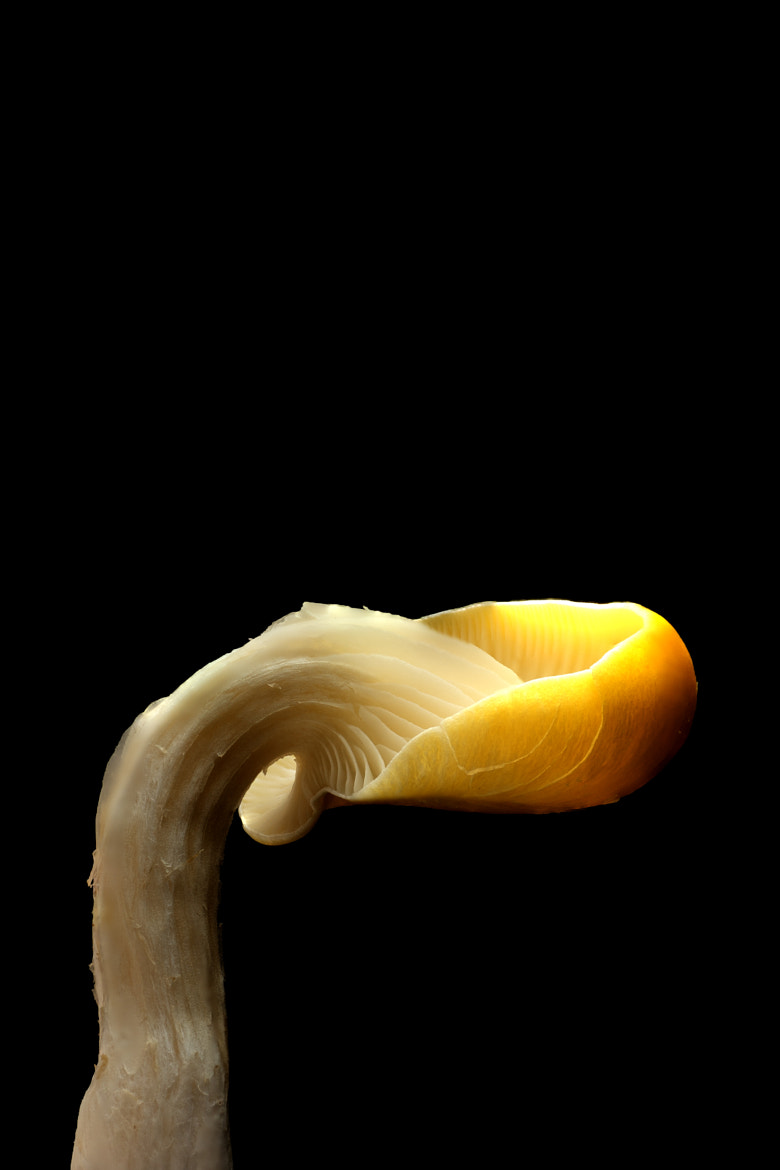 Photograph Yellow Mushroom by Chris Pi on 500px