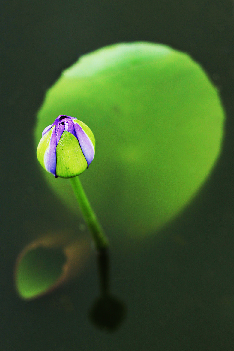 Photograph ~waiting for bloom~ by Suehana Suzie on 500px