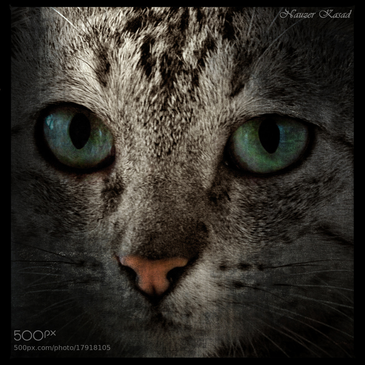 Photograph Feline eyes by Nauzer Kasad on 500px
