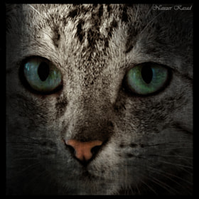 Feline eyes by Nauzer Kasad (NauzerKasad)) on 500px.com