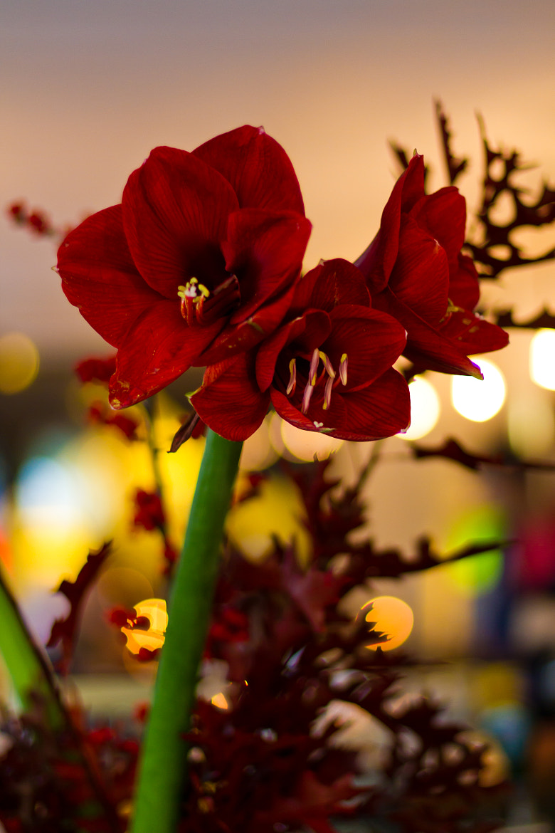 Photograph flowerfull by Axel Kuenne on 500px