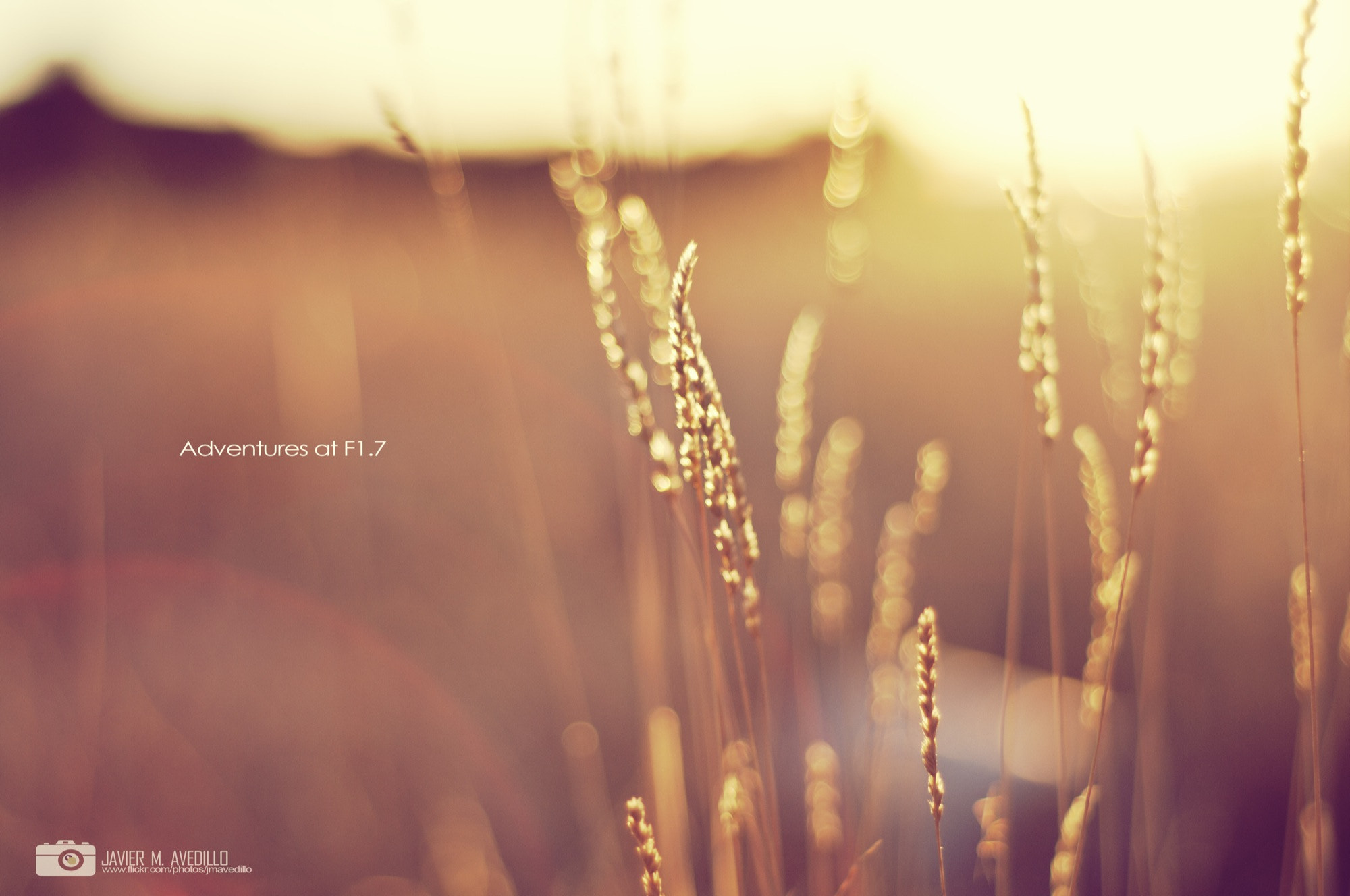 Photograph LIGHT (Adventures at F1.7) by Javier M. Avedillo on 500px