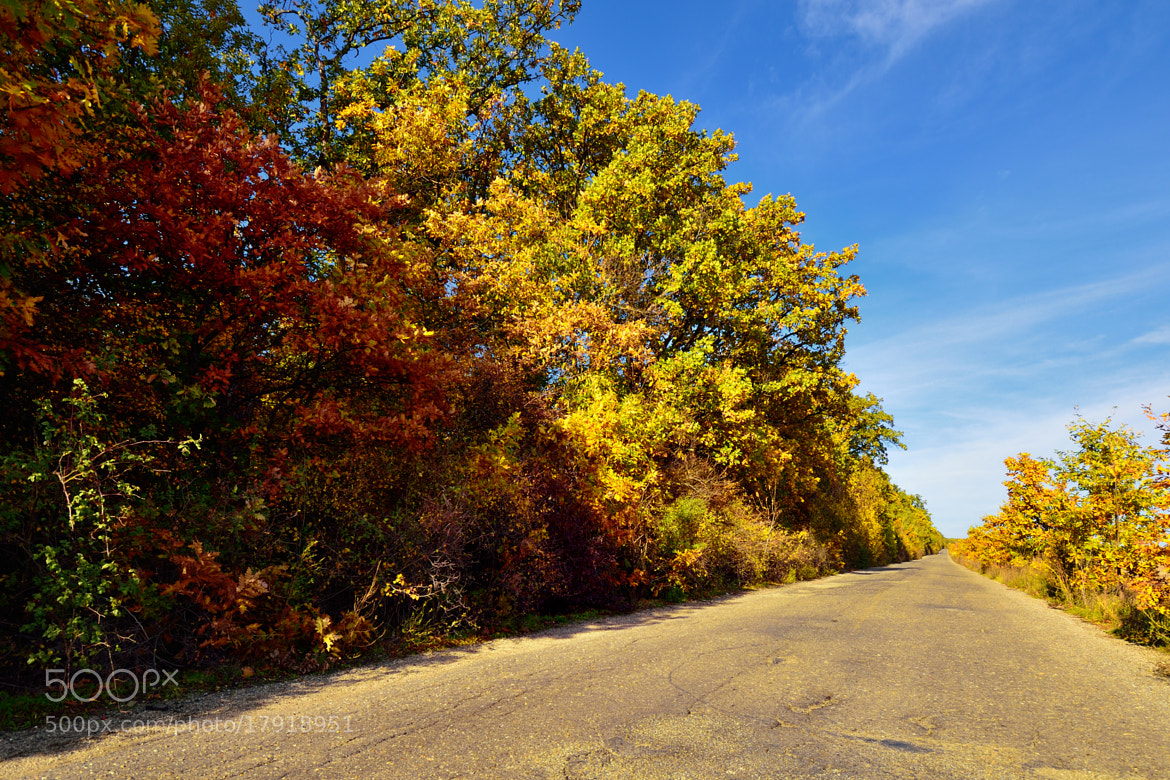 Photograph Autumn Road by Sabin Uivarosan on 500px