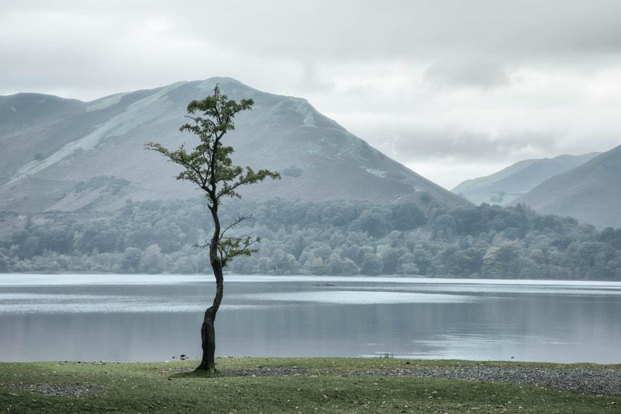 Lone tree on Derwentwater