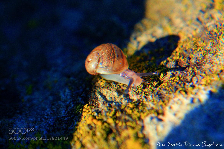 Photograph Um minusculo Caracol by Ana Sofia Baptista on 500px