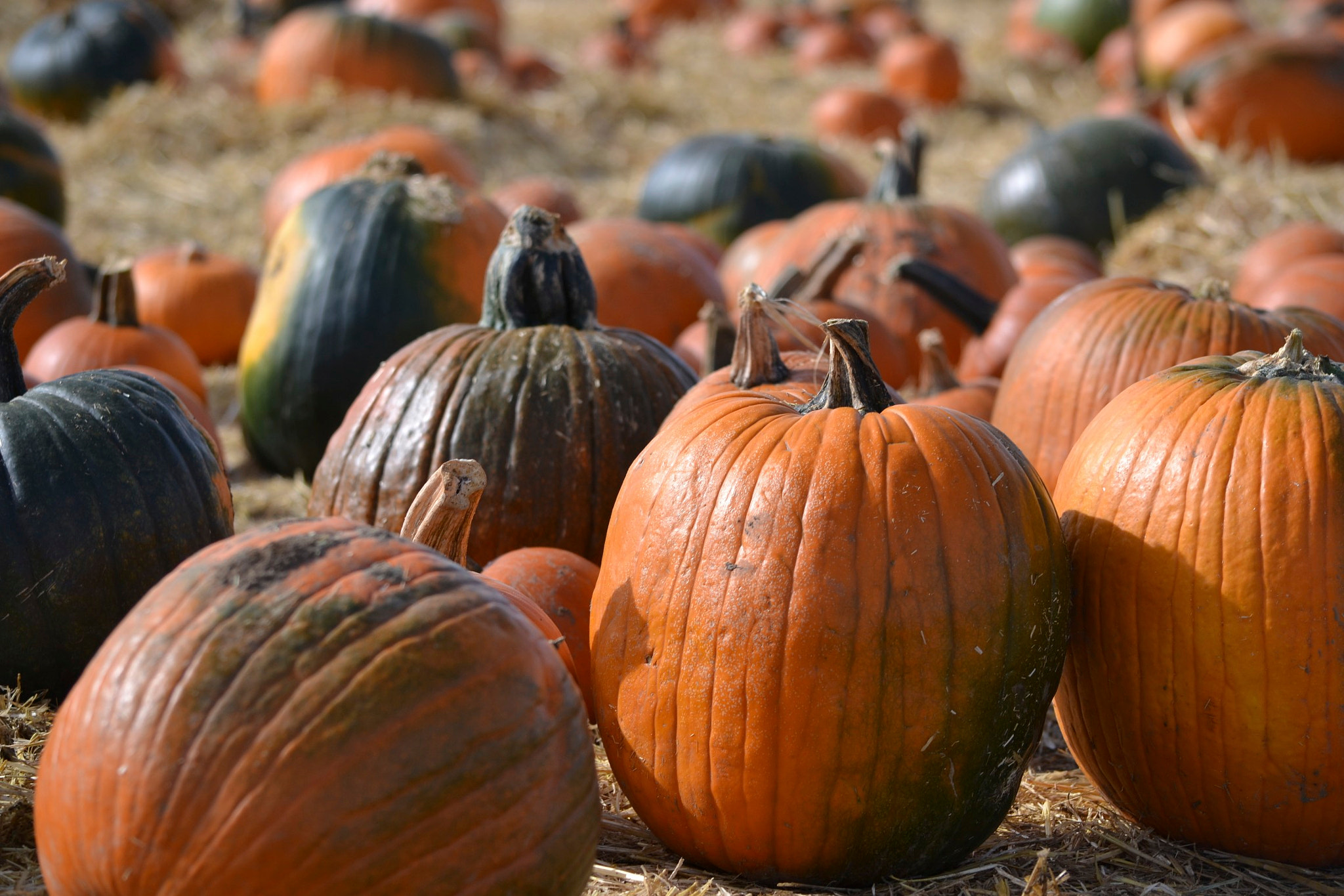 Photograph Pumpkins Galore by Greg  Linster on 500px