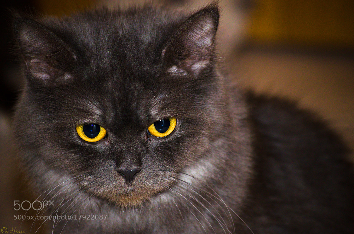Photograph What an eyes !! by HC  Photos on 500px