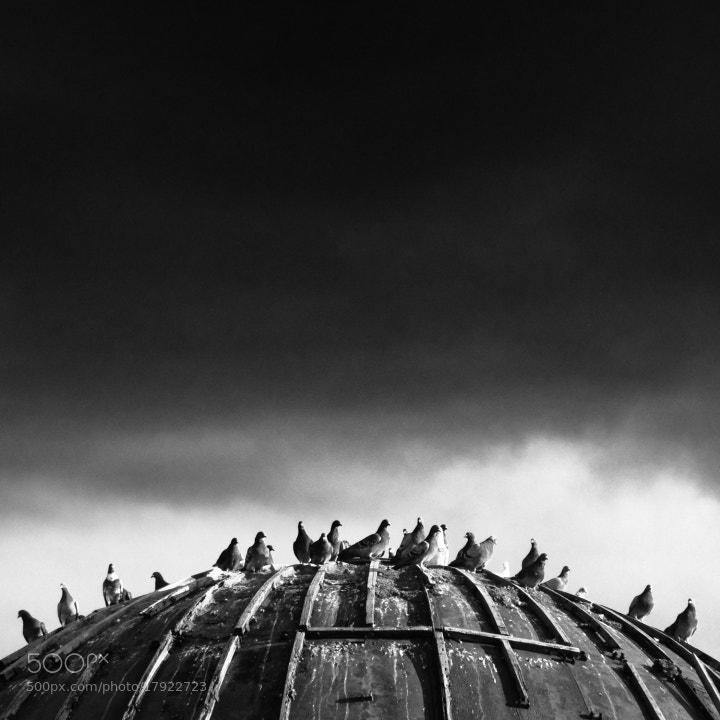 Photograph Birds III. by Marian Sztrecsko on 500px