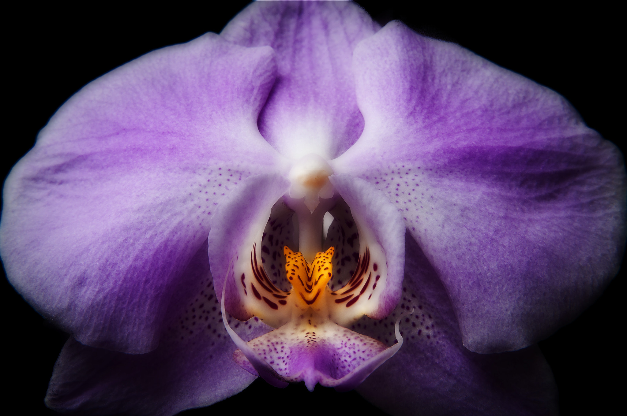 Photograph Orchid1 by Jan Westman on 500px