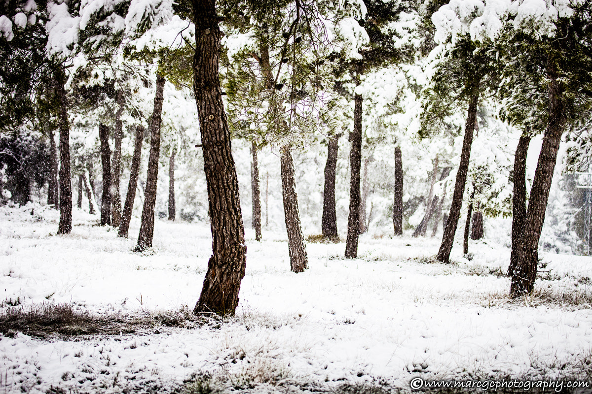 Photograph White Foreset by Marc Garrido on 500px