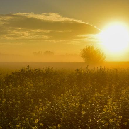 Golden sunrise in Weerde
