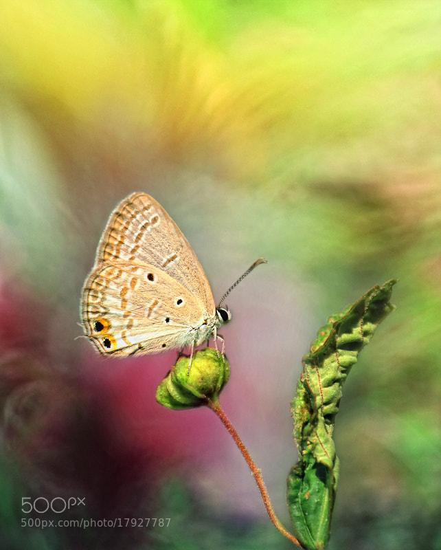Photograph  November Color by Arief Perdana on 500px