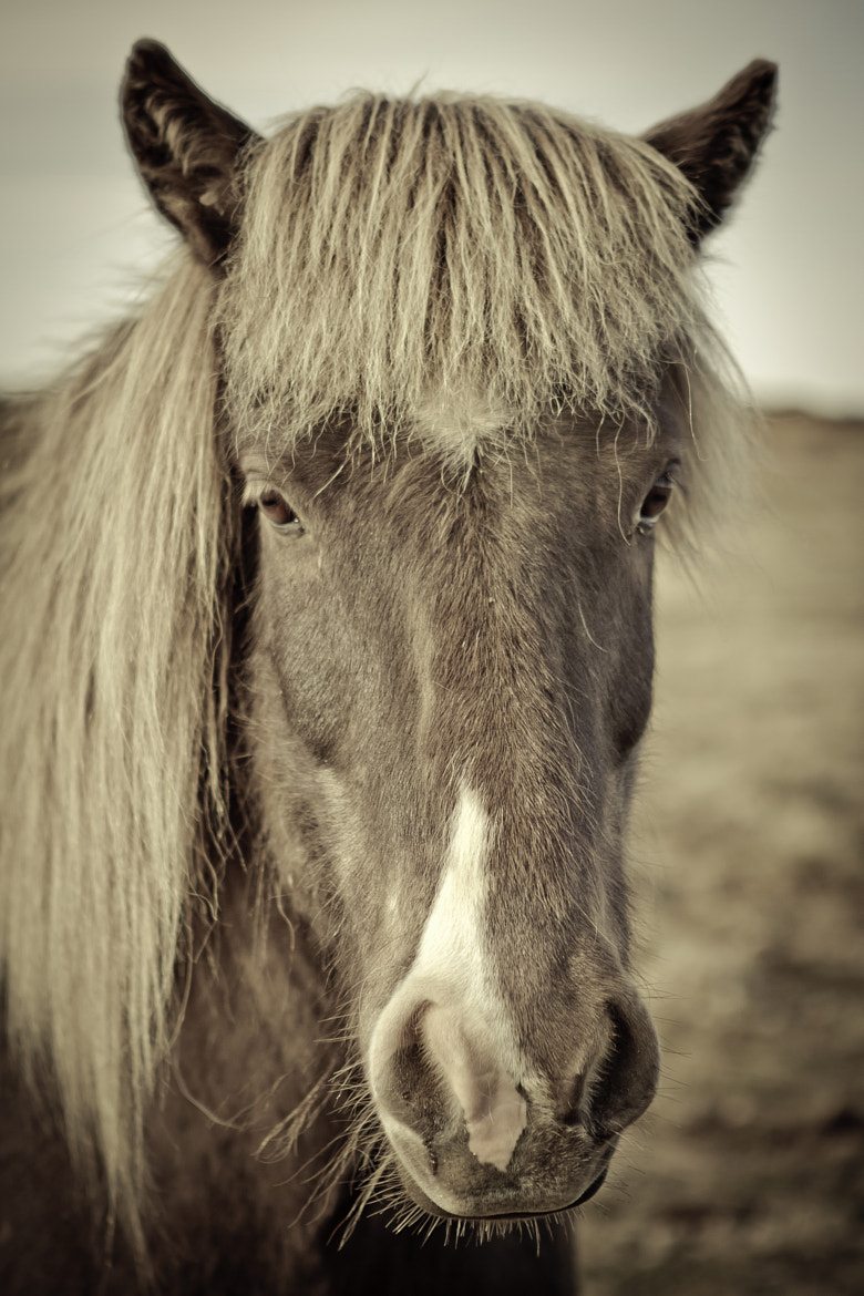 Photograph The Icelandic Horse by Adam Skrzeszewski on 500px