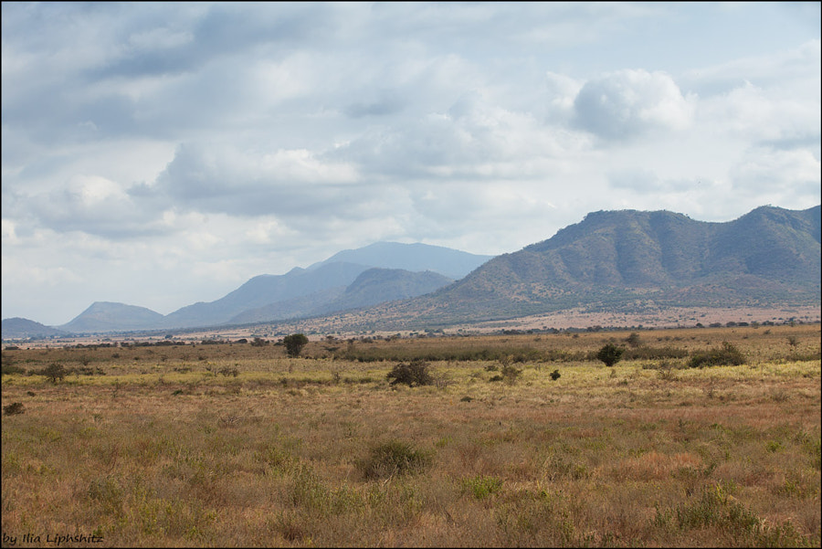 Landscapes of Mkomazi №2