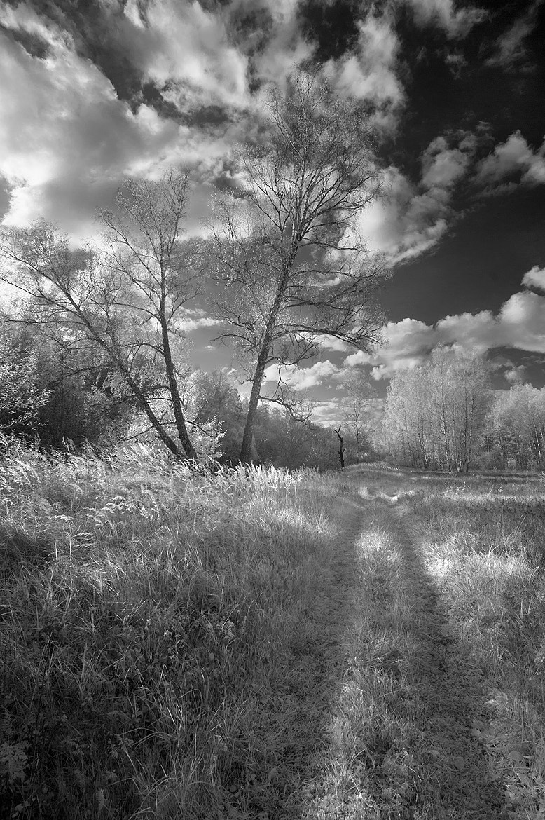 Photograph The road by Andre Ermolaev on 500px