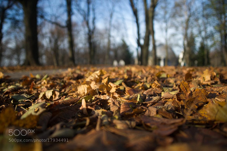 Photograph ***** by Vladimir Shaminko on 500px