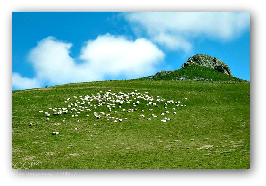 Camino de Santiago 2012  Huntto - Roncesvalles VII.  _____________________________  El Camino del sabio consiste en actuar sin luchar.  L. T.
