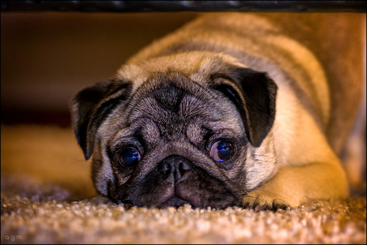 Photograph Dog's Life by Estudio AGM  on 500px