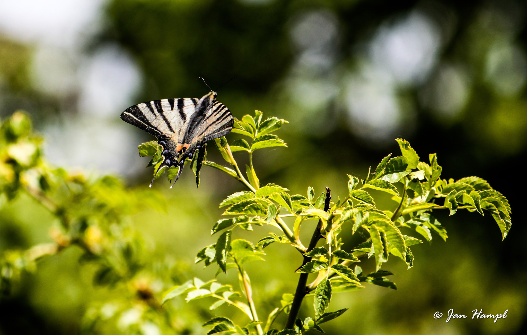 Photograph Butterfly by Jan Hampl on 500px