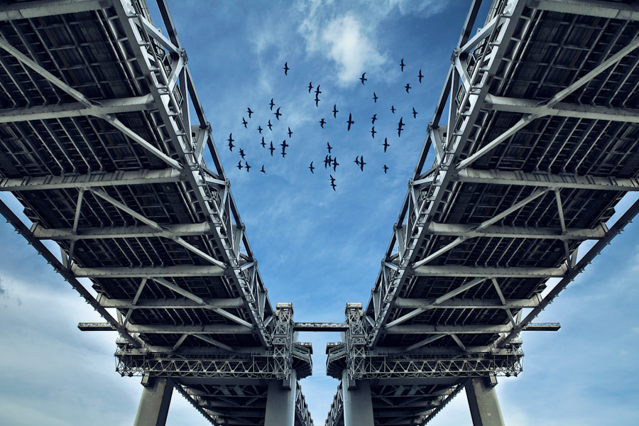 Photograph Migration by Loic Labranche on 500px