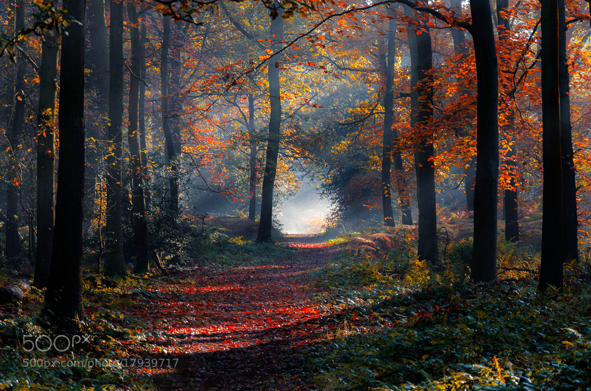 Photograph Autumn in the Forest by Pawel Niktos on 500px