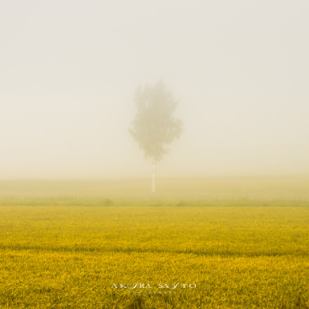 『 In the mist 』, Sony SLT-A33, Tamron AF 70-300mm F4-5.6 Di LD Macro 1:2
