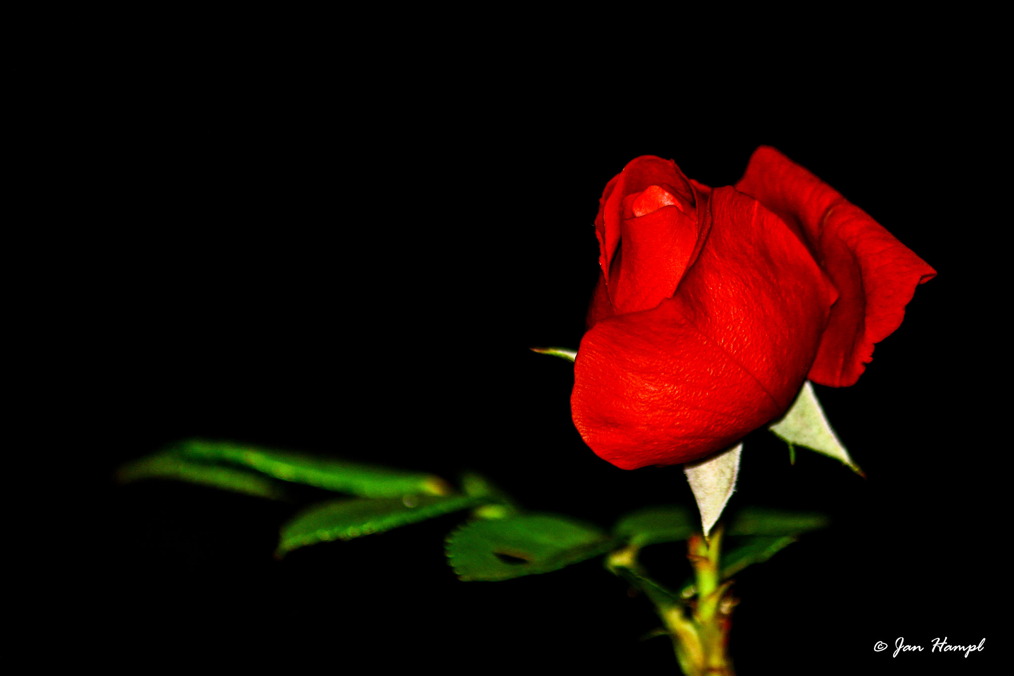 Photograph Rose by Jan Hampl on 500px