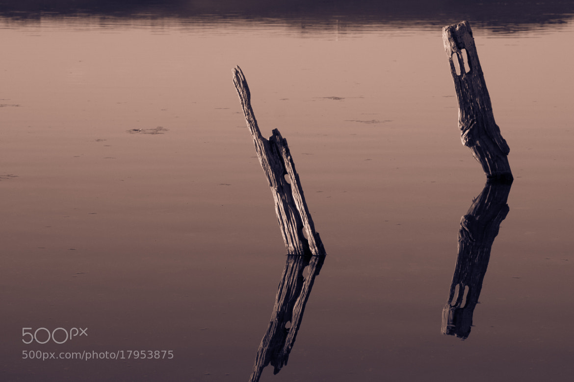 Photograph Reflections by David Asch on 500px