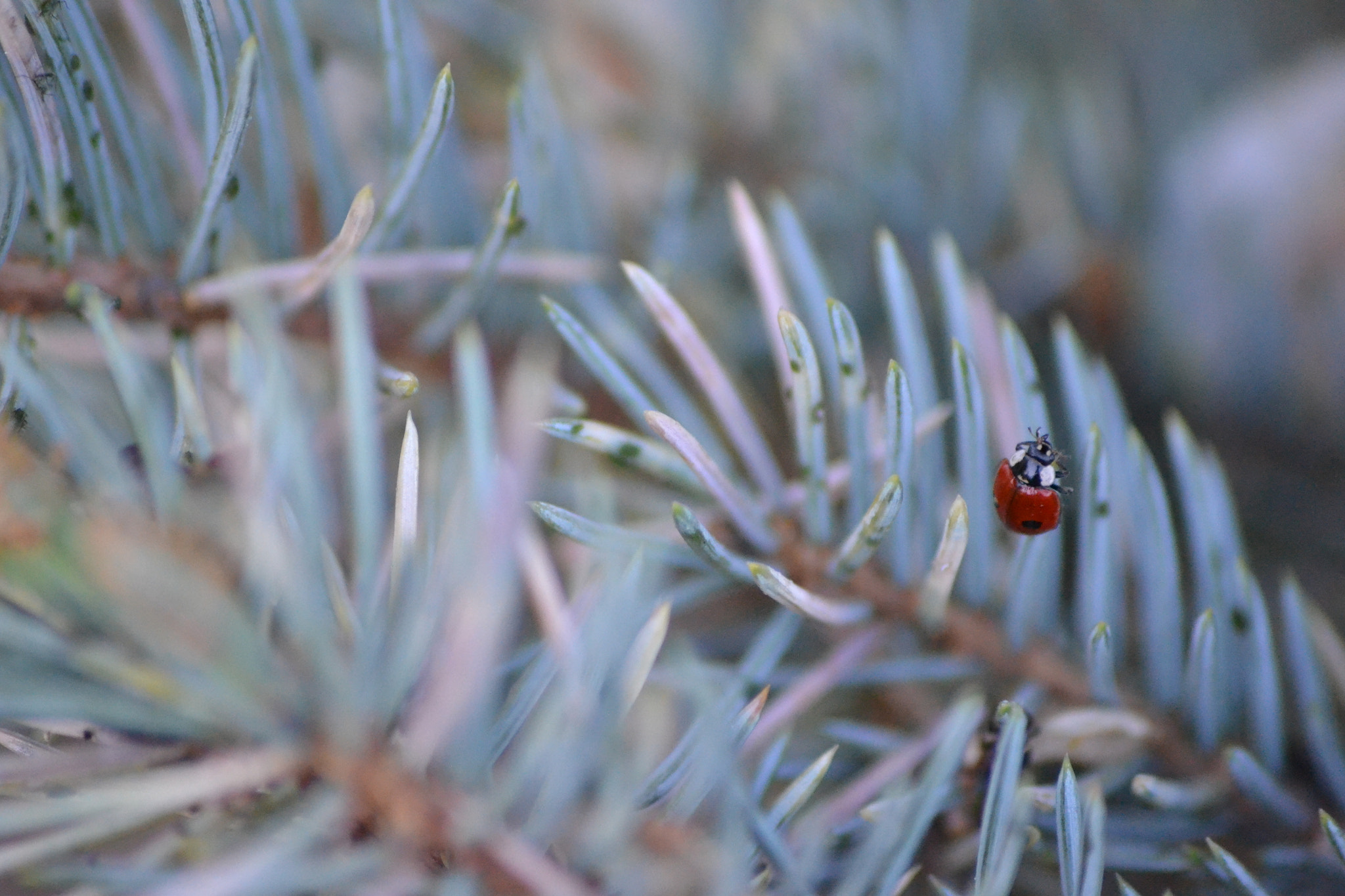 Photograph Coccinellidae... by Mónica  Paiva on 500px