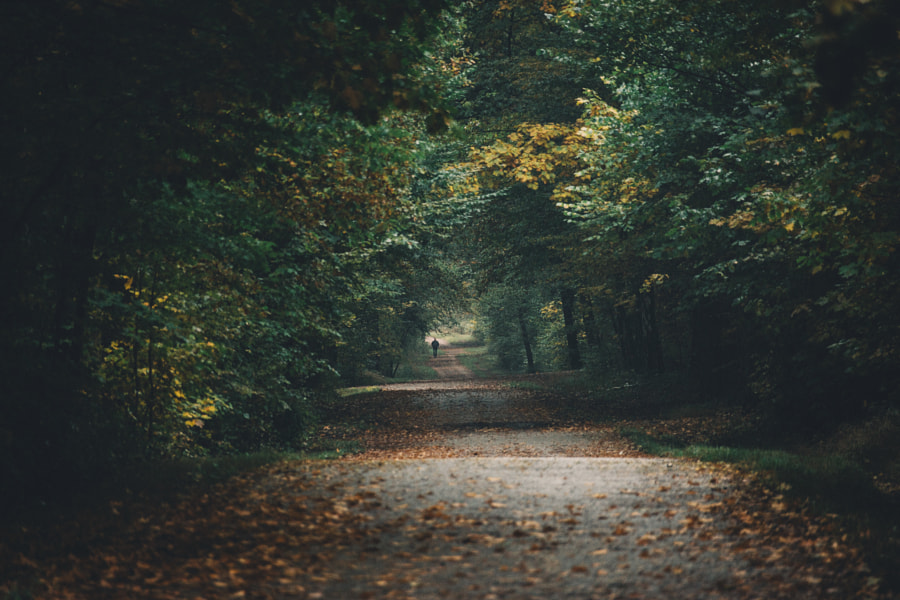 Check out your local surroundings! by Johannes Hulsch