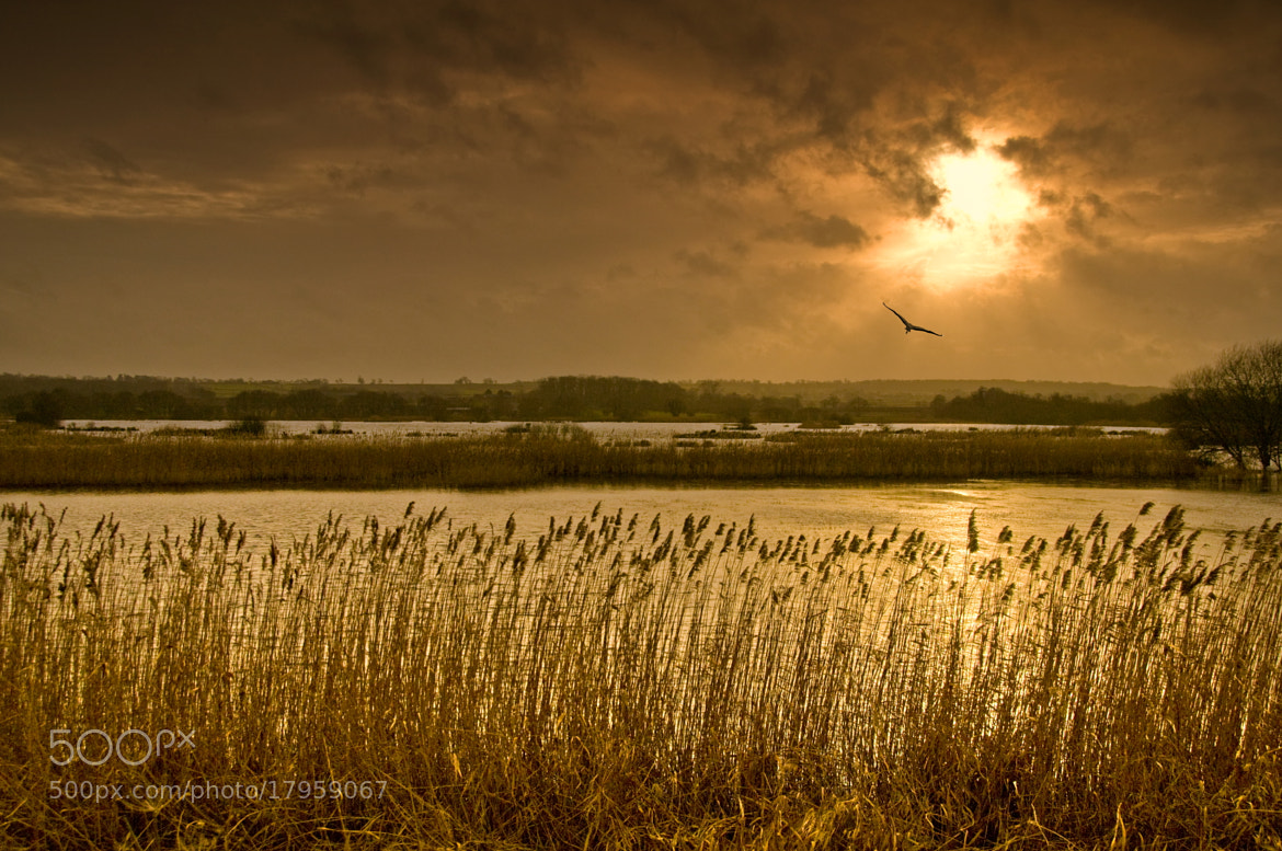 Photograph Shapwick sunset with heron by Chris Spracklen on 500px