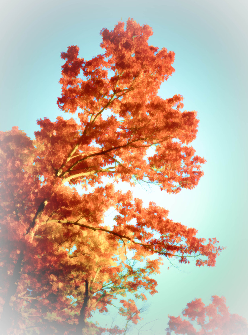 Photograph Autumn Palette by Ronald Roberts on 500px