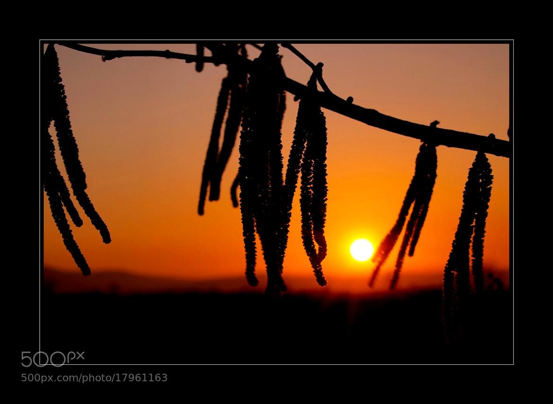 Photograph Warmth by Kounoupis Anastasios  on 500px